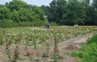 Ботанический сад 12.06.2016 (Дятлова Е.)