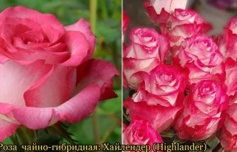 Розарий. Ботанический сад Одесского национального университета.(Челбашев С.)